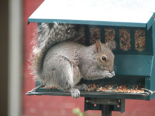 How To Get Rid Of Squirrels