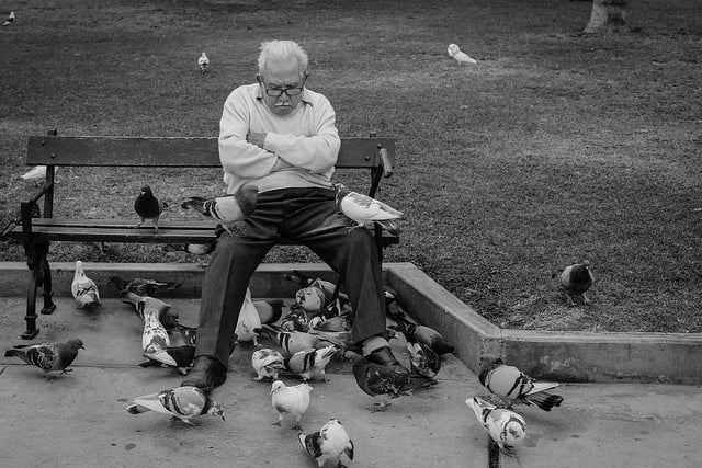 how to get rid of pigeons. Photo Credit: Geraint Rowland