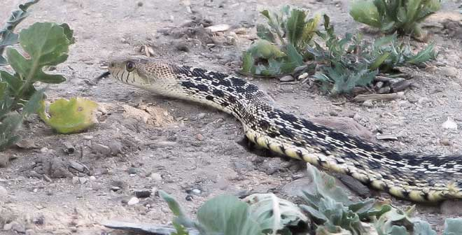 How To Get Rid Of Snakes Professional And Diy Snake Removal