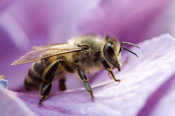 How To Get Rid Of Bees Safe Effective Amp Practical