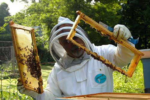 bee removal by beekeepers