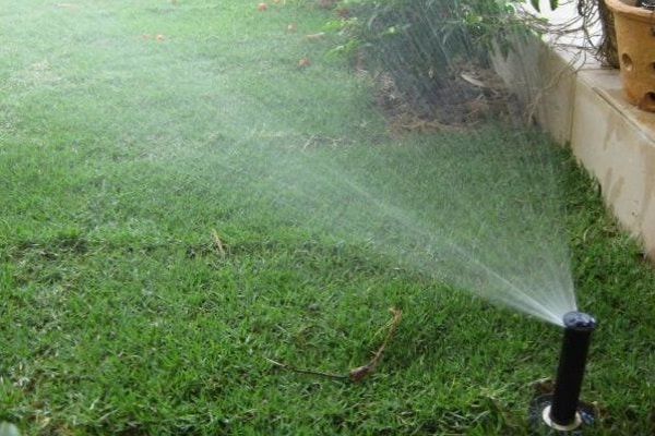 how to get rid of skunks automated sprinklers