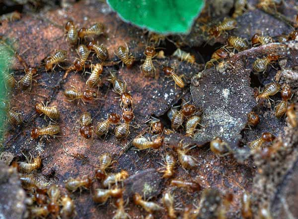& How to Get Rid of Termites: The Ultimate Guide