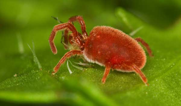 Common Bugs Mistaken For Bed Bugs