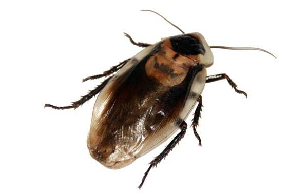 cockroach foggers
