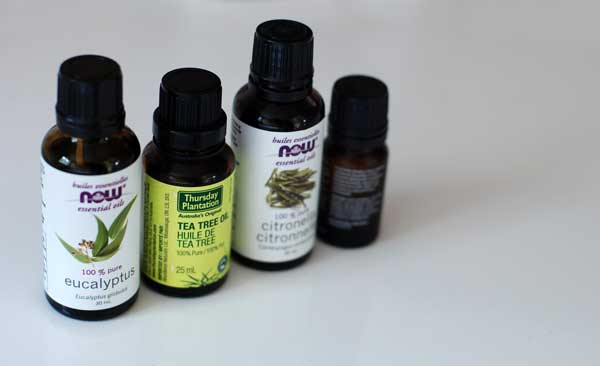 is tea tree oil effective treatment for bed bugs
