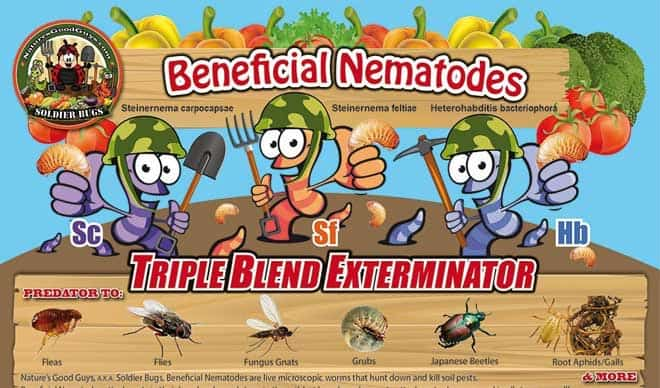 Are Beneficial Nematodes Effective For Controlling Termites