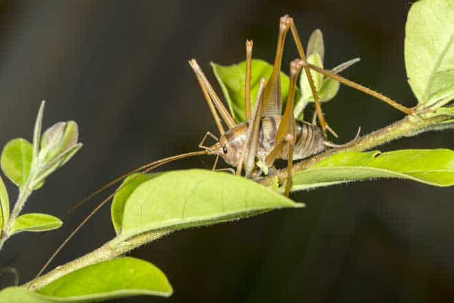 How to get rid of camel crickets How to get rid of crickets in the garden