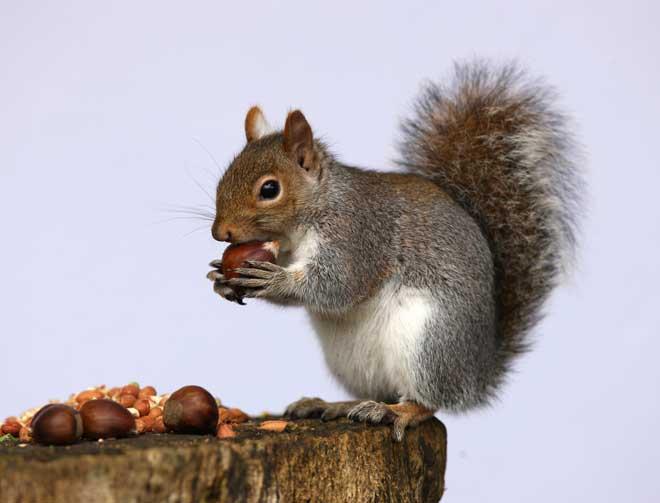 will mothballs keep squirrels away