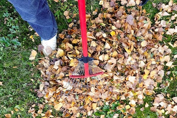 raking the garden to prevent insect infestations