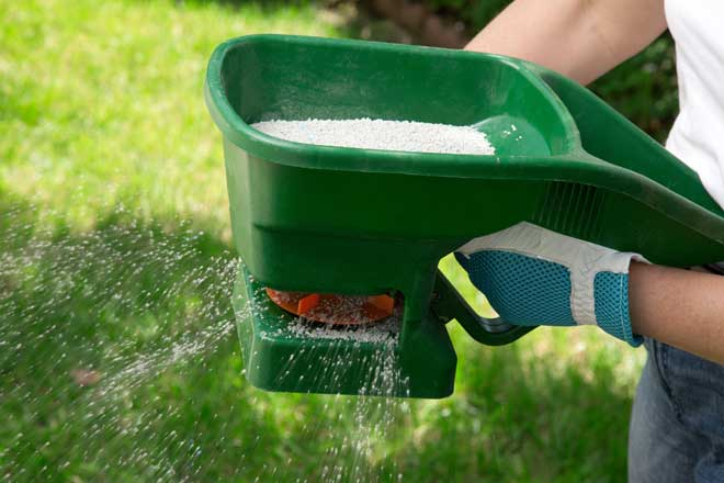 how to get rid of springtails - lawn granules