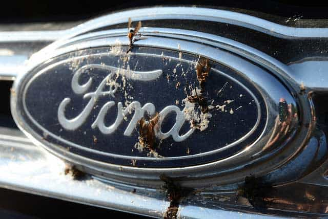 How to Get Rid of Lovebugs and Preventing Lovebug Damage to Cars
