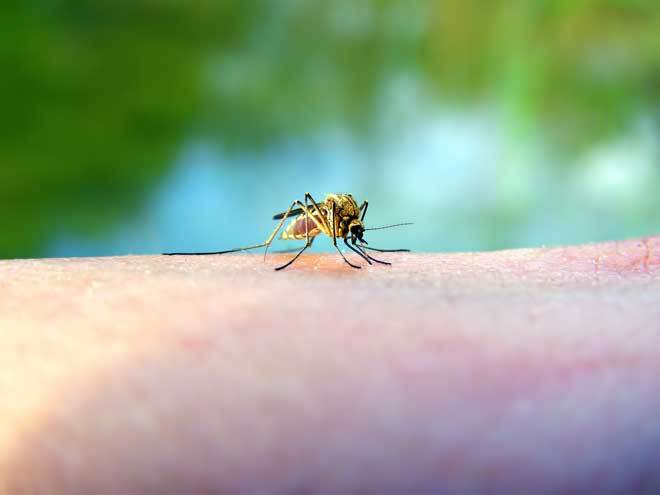 8 Bugs That Look Like Mosquitoes - Pestkilled