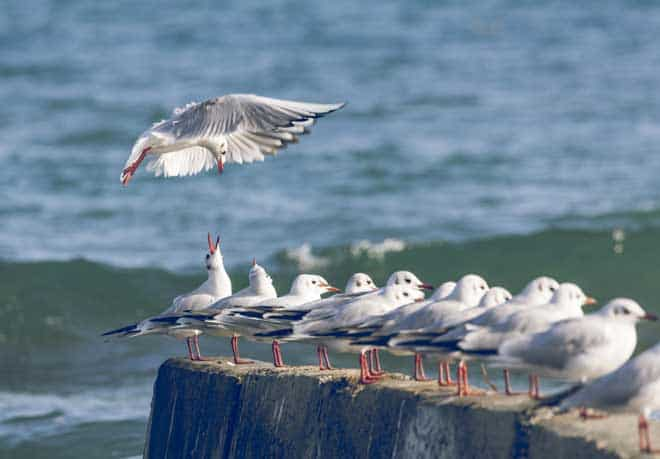 how to get rid of seagulls