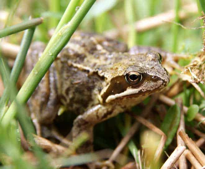 How to Get Rid of Frogs Using Natural Methods and Chemicals