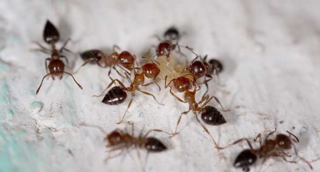 Group of Ants on Wall
