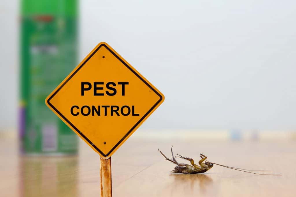 Bed Bug Extermination Cost What Do You Need To Know Pestkilled