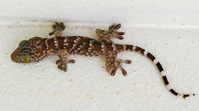 Lizards Archives Pestkilled