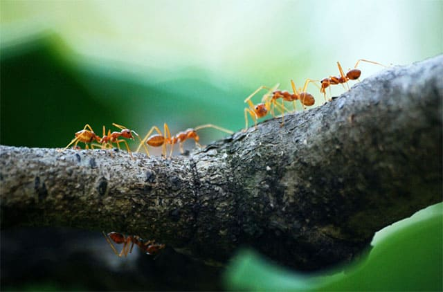 Ants on the tree