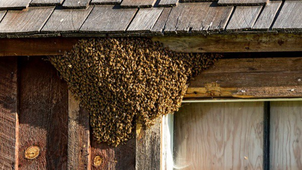 getting rid of bees in the house