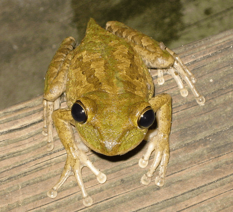 How To Get Rid Of Tree Frogs On Your Porch